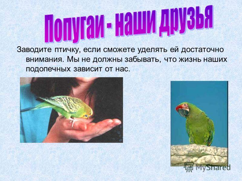 Заводите птичку, если сможете уделять ей достаточно внимания. Мы не должны забывать, что жизнь наших подопечных зависит от нас.