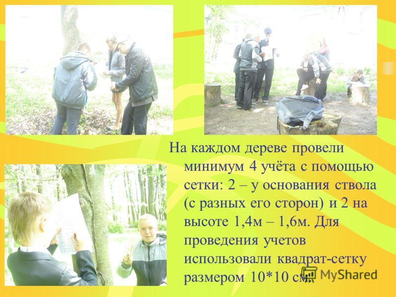 На каждом дереве провели минимум 4 учёта с помощью сетки: 2 – у основания ствола (с разных его сторон) и 2 на высоте 1,4м – 1,6м. Для проведения учетов использовали квадрат-сетку размером 10*10 см.