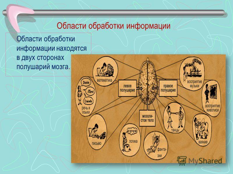 Области обработки информации Области обработки информации находятся в двух сторонах полушарий мозга.