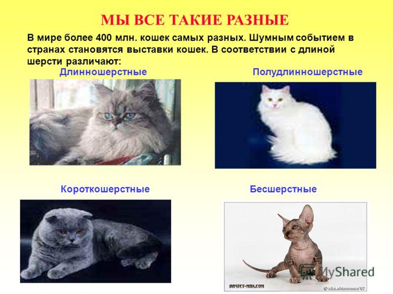 МЫ ВСЕ ТАКИЕ РАЗНЫЕ В мире более 400 млн. кошек самых разных. Шумным событием в странах становятся выставки кошек. В соответствии с длиной шерсти различают: ДлинношерстныеПолудлинношерстные КороткошерстныеБесшерстные