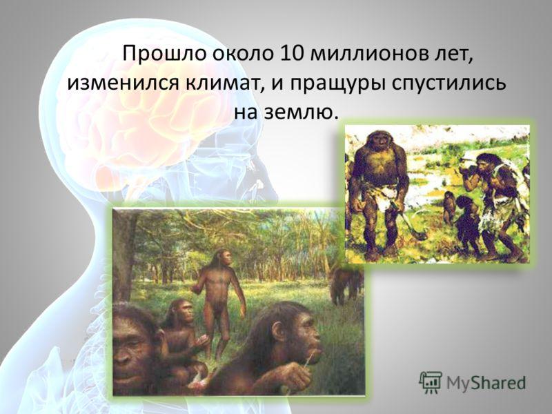 Прошло около 10 миллионов лет, изменился климат, и пращуры спустились на землю.