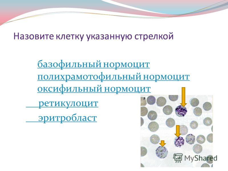 Эритробласт