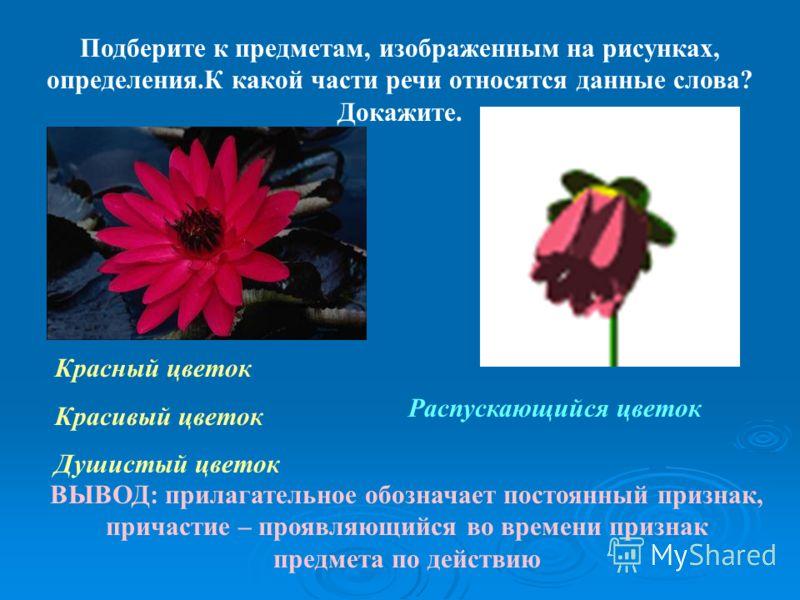 Подберите к предметам, изображенным на рисунках, определения.К какой части речи относятся данные слова? Докажите. Красный цветок Красивый цветок Душистый цветок Распускающийся цветок ВЫВОД: прилагательное обозначает постоянный признак, причастие – пр