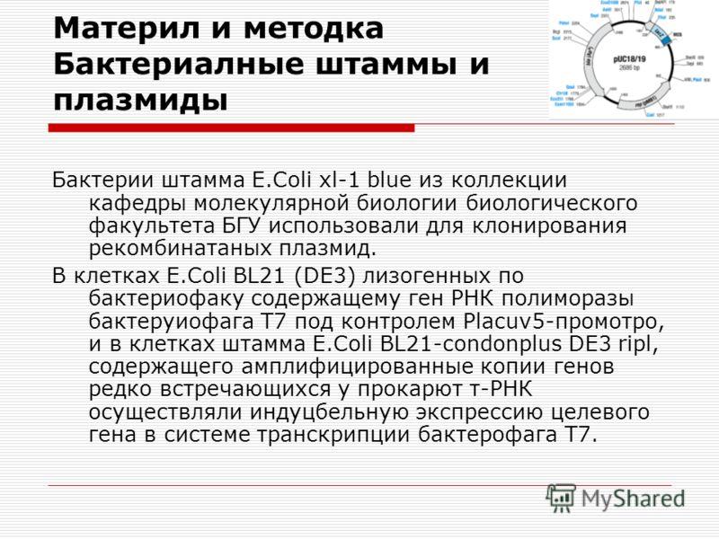 Материл и методка Бактериалные штаммы и плазмиды Бактерии штамма E.Coli xl-1 blue из коллекции кафедры молекулярной биологии биологического факультета БГУ использовали для клонирования рекомбинатаных плазмид. В клетках E.Coli ВL21 (DE3) лизогенных по