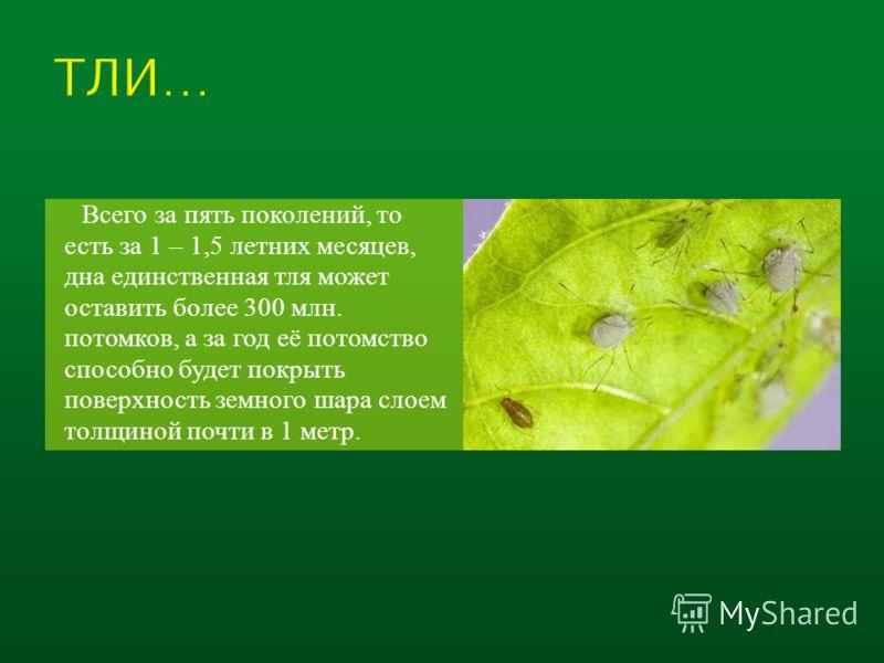 Всего за пять поколений, то есть за 1 – 1,5 летних месяцев, дна единственная тля может оставить более 300 млн. потомков, а за год её потомство способно будет покрыть поверхность земного шара слоем толщиной почти в 1 метр.