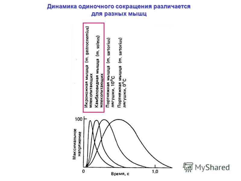 Динамика одиночного сокращения различается для разных мышц
