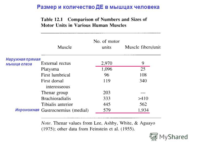 Размер и количество ДЕ в мышцах человека Наружная прямая мышца глаза Икроножная