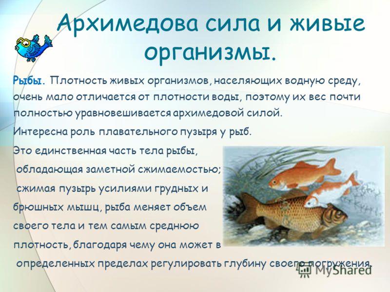 Архимедова сила и живые организмы. Рыбы. Плотность живых организмов, населяющих водную среду, очень мало отличается от плотности воды, поэтому их вес почти полностью уравновешивается архимедовой силой. Интересна роль плавательного пузыря у рыб. Это е