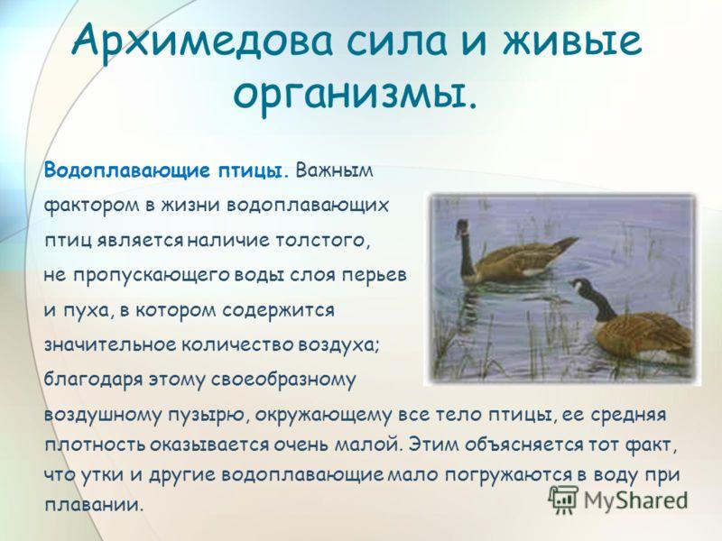 Архимедова сила и живые организмы. Водоплавающие птицы. Важным фактором в жизни водоплавающих птиц является наличие толстого, не пропускающего воды слоя перьев и пуха, в котором содержится значительное количество воздуха; благодаря этому своеобразном