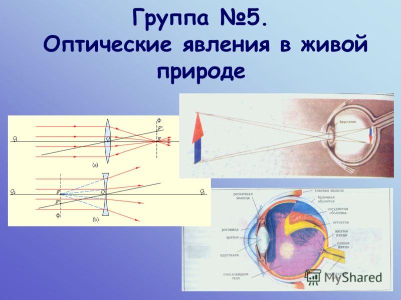 Группа 5. Оптические явления в живой природе