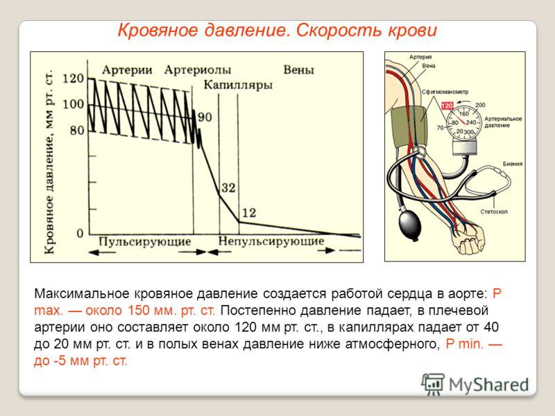 Кровяное давление. Скорость крови Максимальное кровяное давление создается работой сердца в аорте: P max. около 150 мм. рт. ст. Постепенно давление падает, в плечевой артерии оно составляет около 120 мм рт. ст., в капиллярах падает от 40 до 20 мм рт.