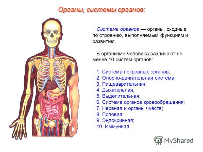 Система органов органы, сходные по строению, выполняемым функциям и развитию. В организме человека различают не менее 10 систем органов: 1. Система покровных органов; 2. Опорно-двигательная система; 3. Пищеварительная; 4. Дыхательная; 5. Выделительна