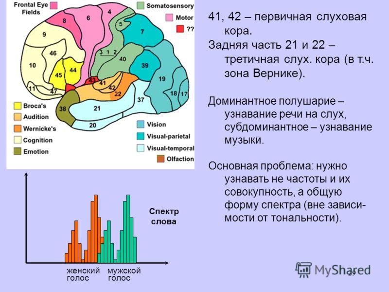29 41, 42 – первичная слуховая кора. Задняя часть 21 и 22 – третичная слух. кора (в т.ч. зона Вернике). Доминантное полушарие – узнавание речи на слух, субдоминантное – узнавание музыки. Основная проблема: нужно узнавать не частоты и их совокупность,