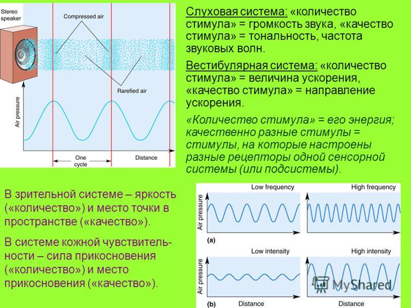 3 Слуховая система: «количество стимула» = громкость звука, «качество стимула» = тональность, частота звуковых волн. Вестибулярная система: «количество стимула» = величина ускорения, «качество стимула» = направление ускорения. «Количество стимула» =