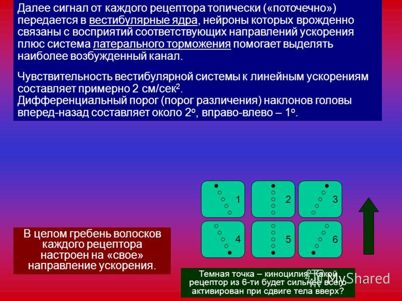 14 В целом гребень волосков каждого рецептора настроен на «свое» направление ускорения. 123 4 56 Темная точка – киноцилия. Какой рецептор из 6-ти будет сильнее всего активирован при сдвиге тела вверх? Далее сигнал от каждого рецептора топически («пот