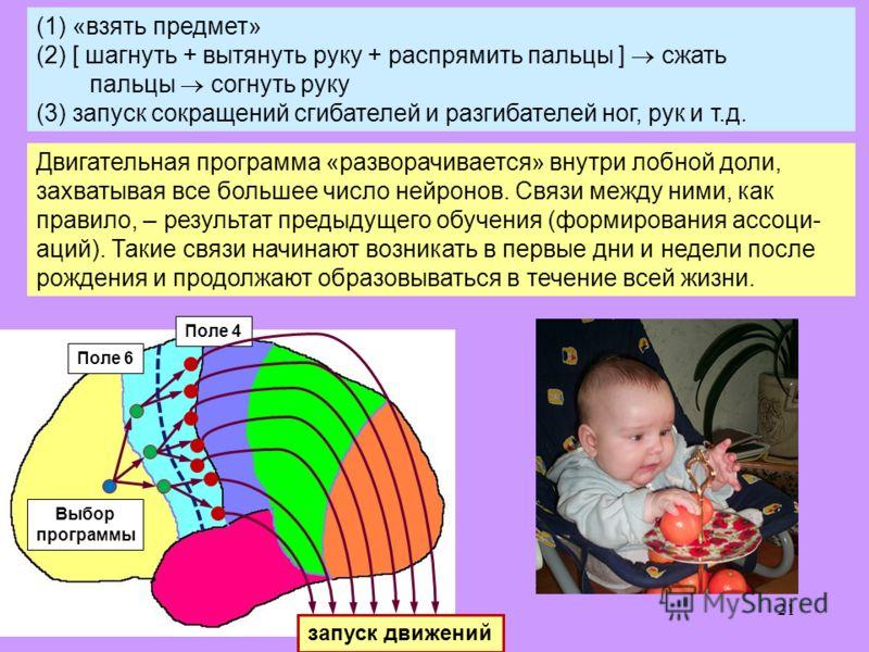21 Двигательная программа «разворачивается» внутри лобной доли, захватывая все большее число нейронов. Связи между ними, как правило, – результат предыдущего обучения (формирования ассоци- аций). Такие связи начинают возникать в первые дни и недели п