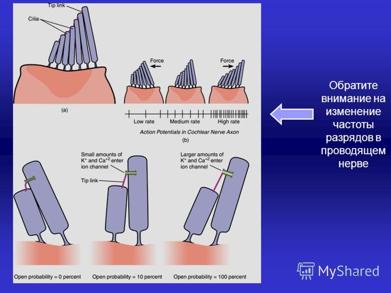 9 Обратите внимание на изменение частоты разрядов в проводящем нерве