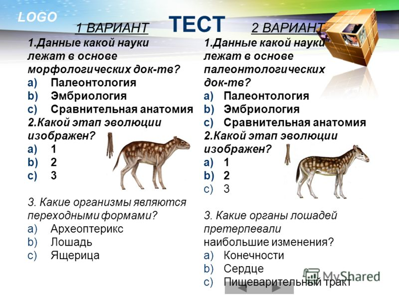 LOGO 1 ВАРИАНТ 1.Данные какой науки лежат в основе морфологических док-тв? a)Палеонтология b)Эмбриология c)Сравнительная анатомия 2.Какой этап эволюции изображен? a)1 b)2 c)3 3. Какие организмы являются переходными формами? a)Археоптерикс b)Лошадь c)