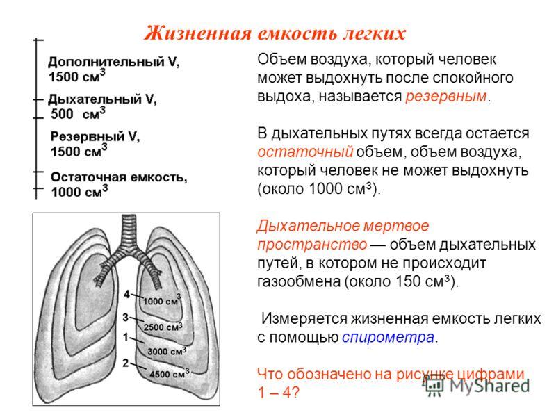 Объем воздуха, который человек может выдохнуть после спокойного выдоха, называется резервным. В дыхательных путях всегда остается остаточный объем, объем воздуха, который человек не может выдохнуть (около 1000 см 3 ). Дыхательное мертвое пространство