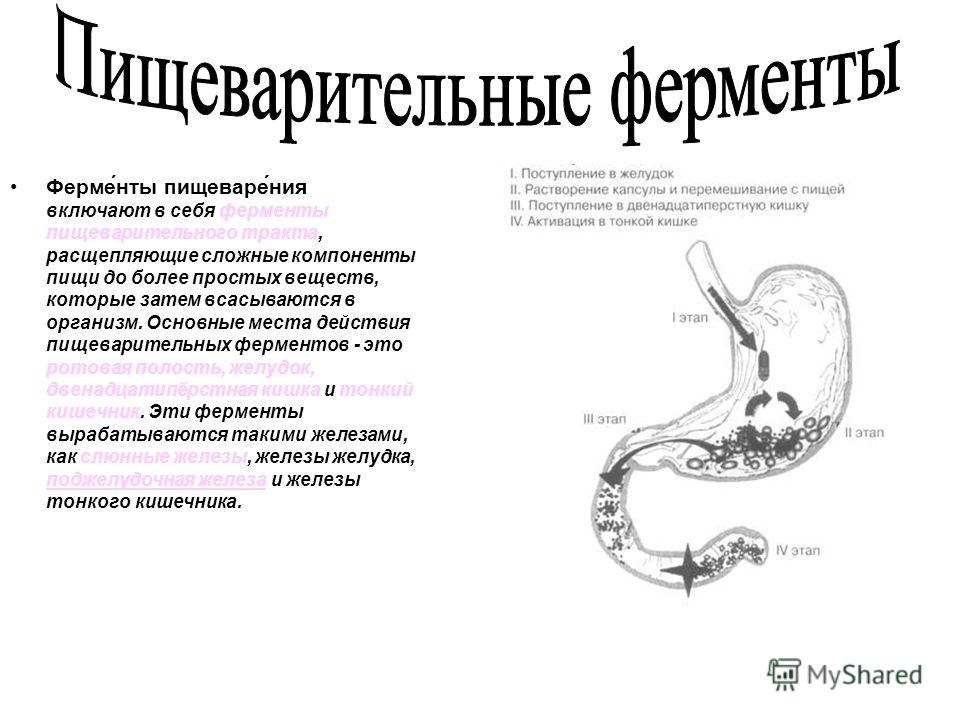 Ферменты пищеварения включают в себя ферменты пищеварительного тракта, расщепляющие сложные компоненты пищи до более простых веществ, которые затем всасываются в организм. Основные места действия пищеварительных ферментов - это ротовая полость, желуд