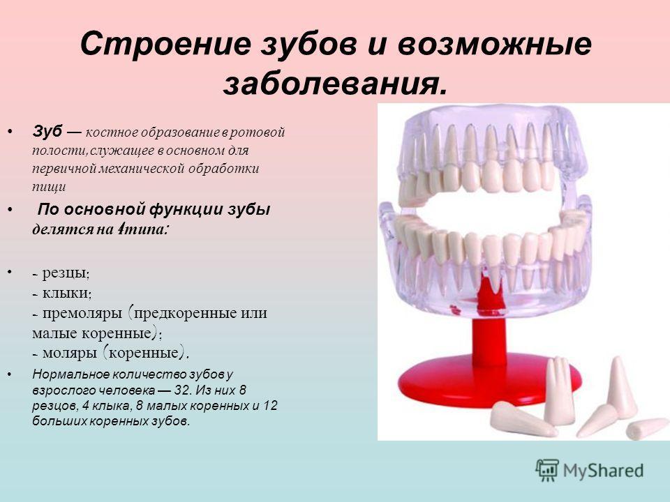 Строение зубов и возможные заболевания. Зуб костное о бразование в р отовой полости, с лужащее в о сновном д ля первичной м еханической о бработки пищи По основной функции зубы делятся н а 4 т ипа : - р езцы ; - к лыки ; - п ремоляры ( предкоренные и