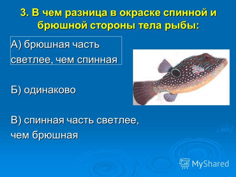 3. В чем разница в окраске спинной и брюшной стороны тела рыбы: А) брюшная часть светлее, чем спинная Б) одинаково В) спинная часть светлее, чем брюшная