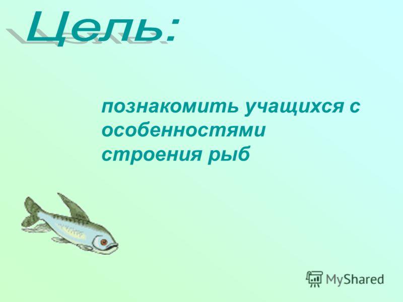 познакомить учащихся с особенностями строения рыб