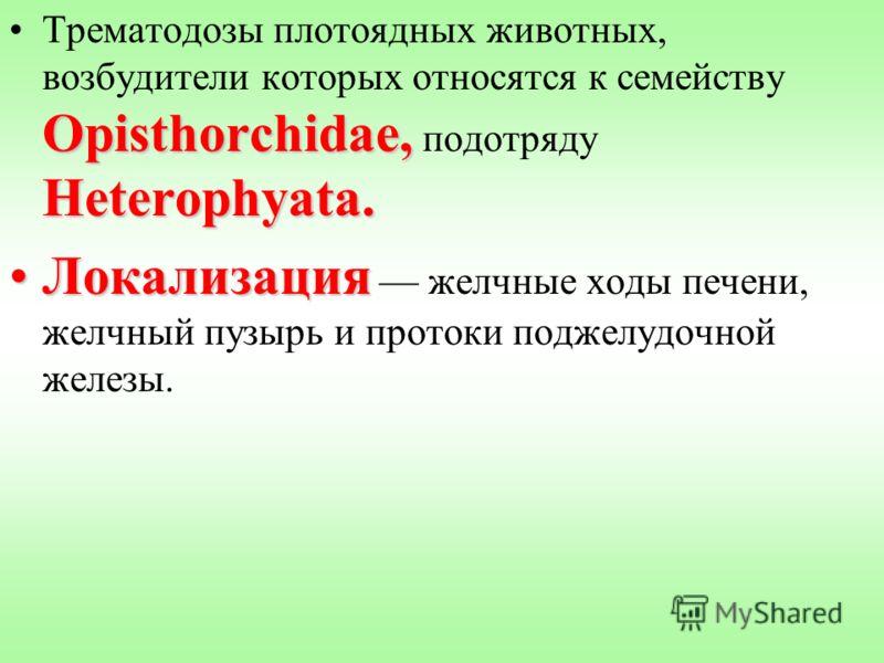 Opisthorchidae, Heterophyata.Трематодозы плотоядных животных, возбудители которых относятся к семейству Opisthorchidae, подотряду Heterophyata. ЛокализацияЛокализация желчные ходы печени, желчный пузырь и протоки поджелудочной железы.
