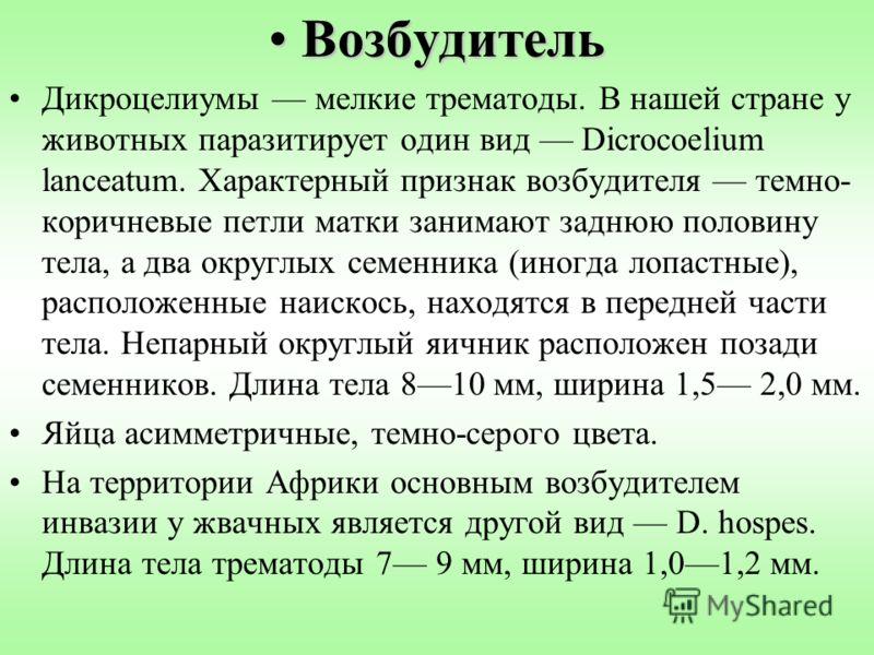 ВозбудительВозбудитель Дикроцелиумы мелкие трематоды. В нашей стране у животных паразитирует один вид Dicrocoelium lanceatum. Характерный признак возбудителя темно- коричневые петли матки занимают заднюю половину тела, а два округлых семенника (иногд