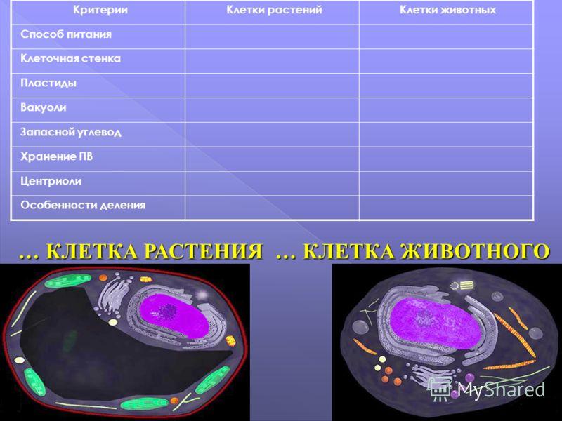 … КЛЕТКА РАСТЕНИЯ … КЛЕТКА ЖИВОТНОГО КритерииКлетки растенийКлетки животных Способ питания Клеточная стенка Пластиды Вакуоли Запасной углевод Хранение ПВ Центриоли Особенности деления