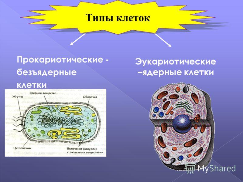 Прокариотические - безъядерные клетки Эукариотические –ядерные клетки Типы клеток
