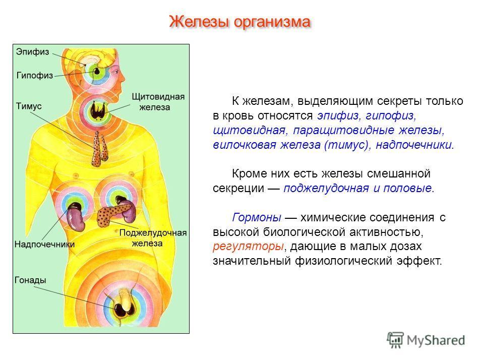 К железам, выделяющим секреты только в кровь относятся эпифиз, гипофиз, щитовидная, паращитовидные железы, вилочковая железа (тимус), надпочечники. Кроме них есть железы смешанной секреции поджелудочная и половые. Гормоны химические соединения с высо