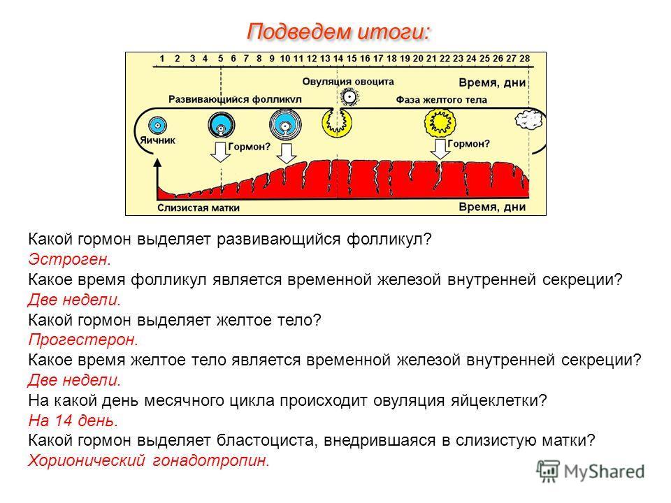 Подведем итоги: Какой гормон выделяет развивающийся фолликул? Эстроген. Какое время фолликул является временной железой внутренней секреции? Две недели. Какой гормон выделяет желтое тело? Прогестерон. Какое время желтое тело является временной железо