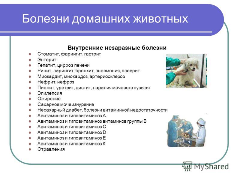 Болезни домашних животных Внутренние незаразные болезни Стоматит, фарингит, гастрит Энтерит Гепатит, цирроз печени Ринит, ларингит, бронхит, пневмония, плеврит Миокардит, миокардоз, артериосклероз Нефрит, нефроз Пиелит, уретрит, цистит, паралич мочев