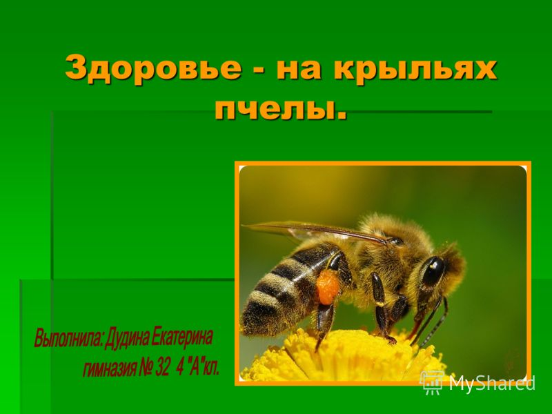 Здоровье - на крыльях пчелы.