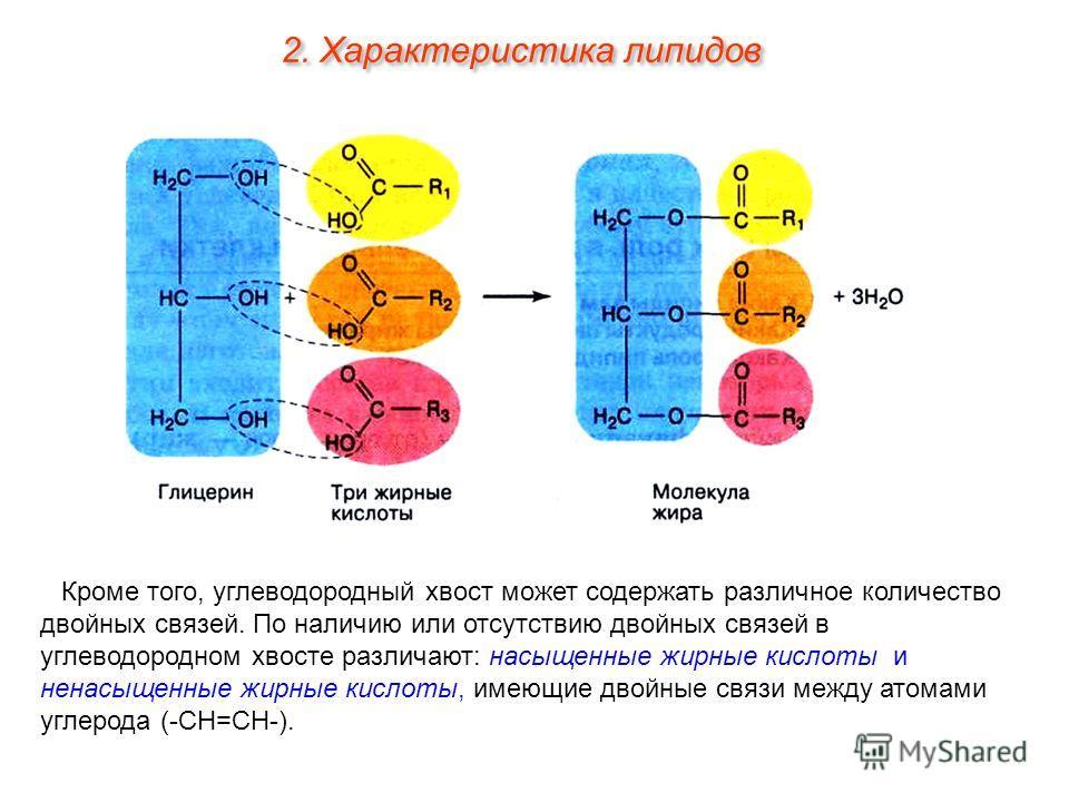 Кроме того, углеводородный хвост может содержать различное количество двойных связей. По наличию или отсутствию двойных связей в углеводородном хвосте различают: насыщенные жирные кислоты и ненасыщенные жирные кислоты, имеющие двойные связи между ато