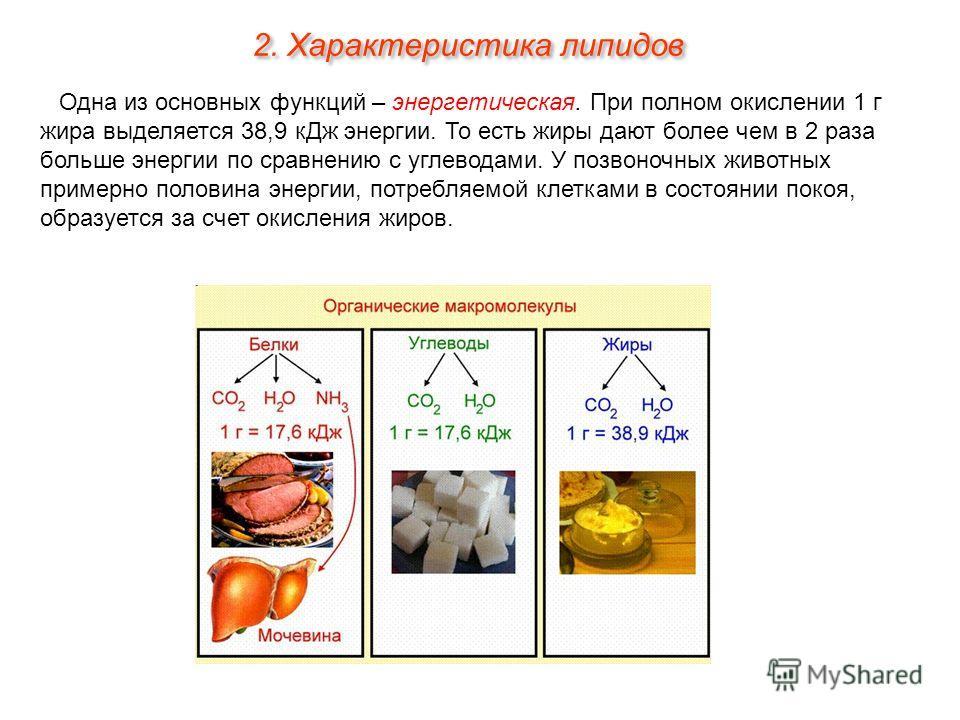 Одна из основных функций – энергетическая. При полном окислении 1 г жира выделяется 38,9 кДж энергии. То есть жиры дают более чем в 2 раза больше энергии по сравнению с углеводами. У позвоночных животных примерно половина энергии, потребляемой клетка