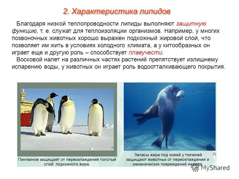 Благодаря низкой теплопроводности липиды выполняют защитную функцию, т. е. служат для теплоизоляции организмов. Например, у многих позвоночных животных хорошо выражен подкожный жировой слой, что позволяет им жить в условиях холодного климата, а у кит