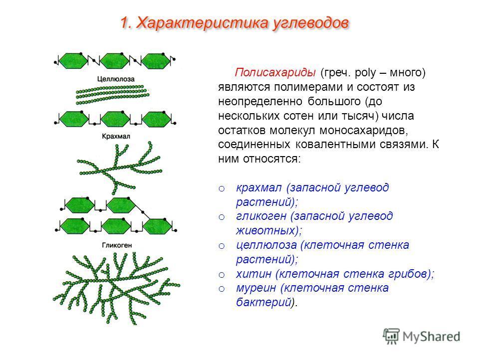 Полисахариды (греч. poly – много) являются полимерами и состоят из неопределенно большого (до нескольких сотен или тысяч) числа остатков молекул моносахаридов, соединенных ковалентными связями. К ним относятся: o крахмал (запасной углевод растений);