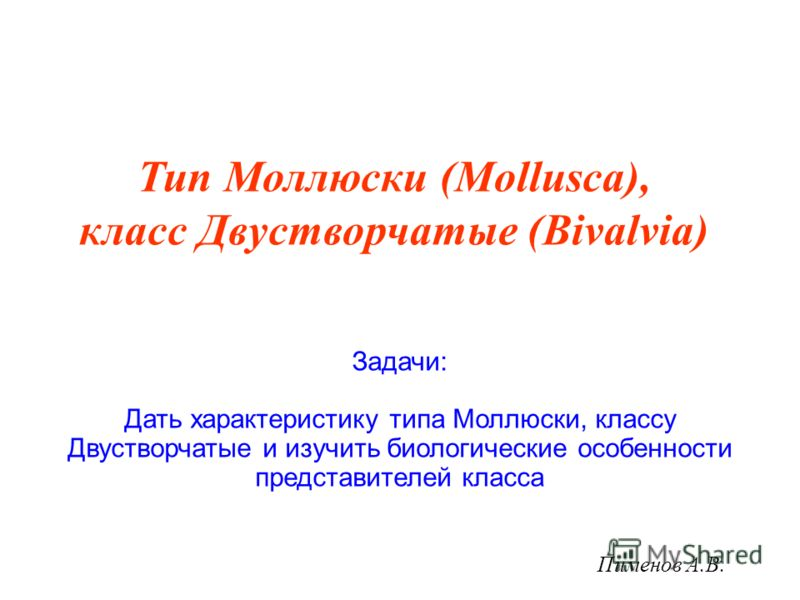 Пименов А.В. Тип Моллюски (Mollusca), класс Двустворчатые (Bivalvia) Задачи: Дать характеристику типа Моллюски, классу Двустворчатые и изучить биологические особенности представителей класса