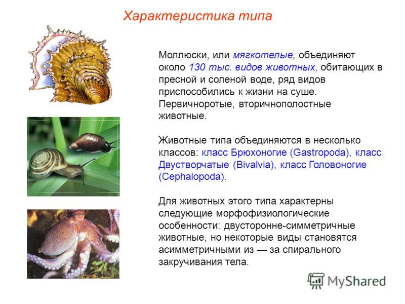 Характеристика типа Моллюски, или мягкотелые, объединяют около 130 тыс. видов животных, обитающих в пресной и соленой воде, ряд видов приспособились к жизни на суше. Первичноротые, вторичнополостные животные. Животные типа объединяются в несколько кл