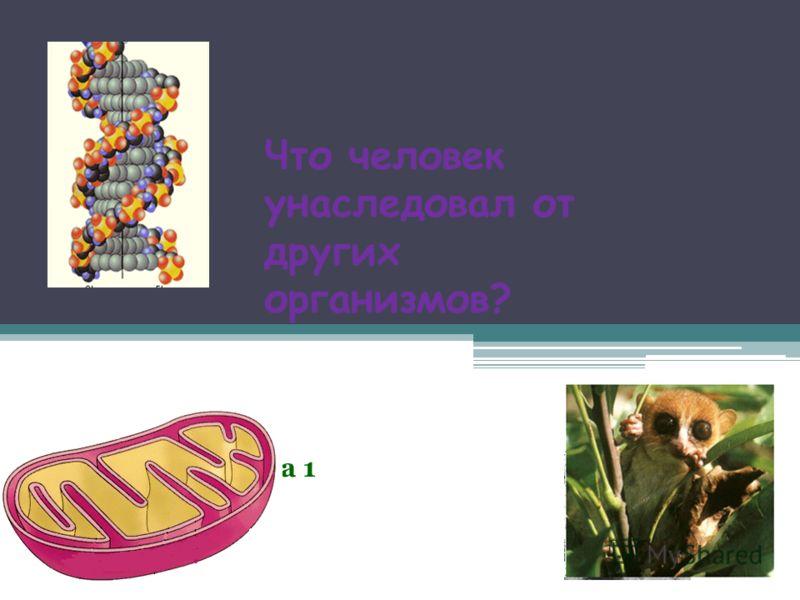 Что человек унаследовал от других организмов? Таблица 1