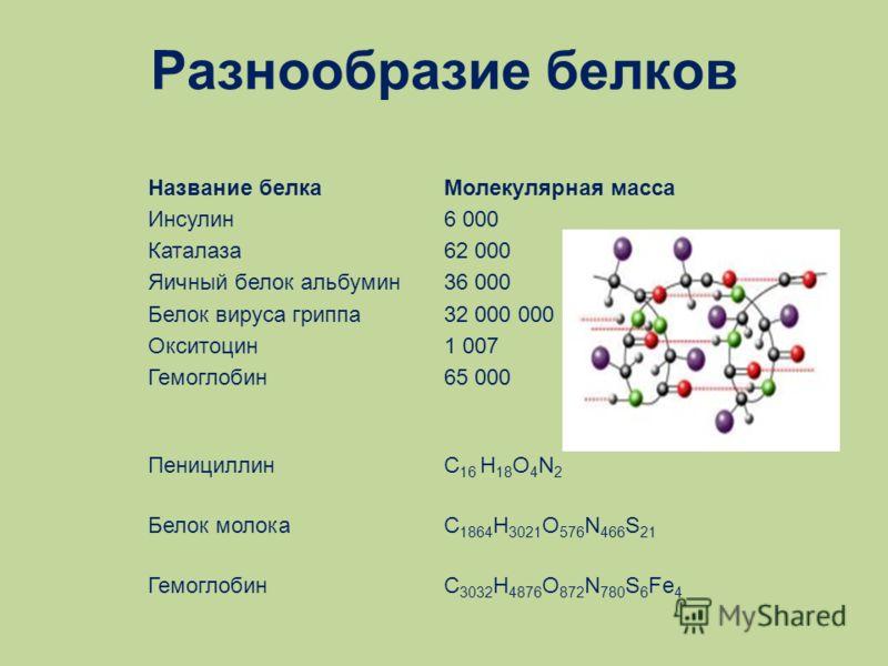 Разнообразие белков Название белкаМолекулярная масса Инсулин6 000 Каталаза62 000 Яичный белок альбумин36 000 Белок вируса гриппа32 000 000 Окситоцин1 007 Гемоглобин65 000 ПенициллинC 16 H 18 O 4 N 2 Белок молокаC 1864 H 3021 O 576 N 466 S 21 Гемоглоб