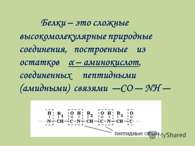 Белки – это сложные высокомолекулярные природные соединения, построенные из остатков α – аминокислот, соединенных пептидными (амидными) связями СО NH