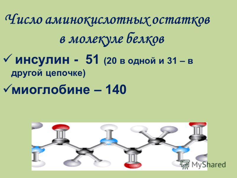 Число аминокислотных остатков в молекуле белков инсулин - 51 (20 в одной и 31 – в другой цепочке) миоглобине – 140