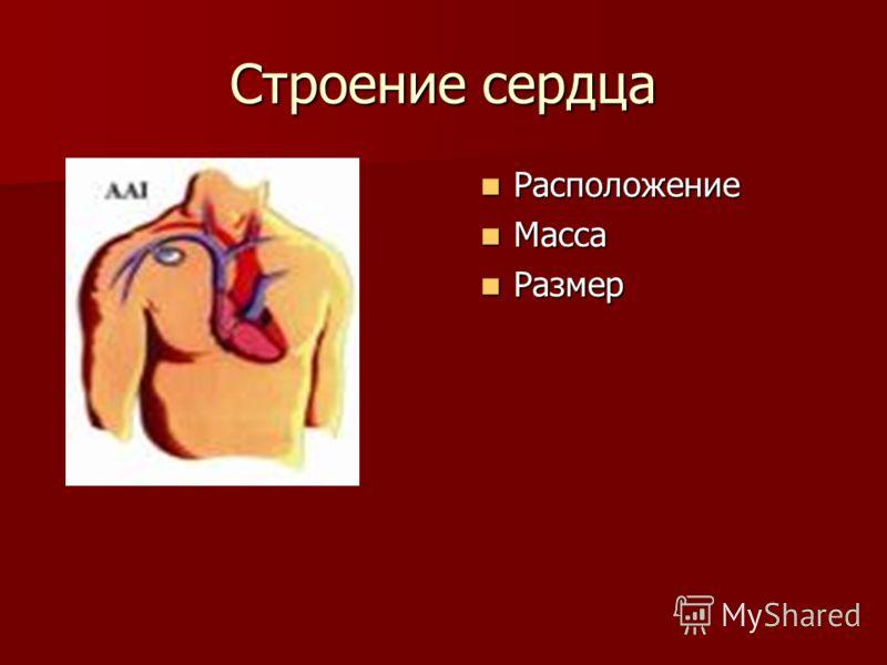 Строение сердца Расположение Расположение Масса Масса Размер Размер