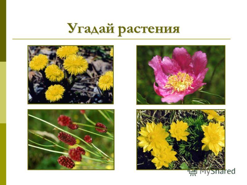 Угадай растения