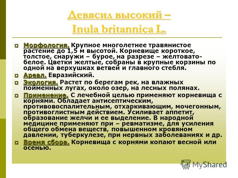 Девясил высокий – Inula britannica L. Девясил высокий – Inula britannica L. Морфология. Морфология. Крупное многолетнее травянистое растение до 1,5 м высотой. Корневище короткое, толстое, снаружи – бурое, на разрезе – желтовато- белое. Цветки желтые,