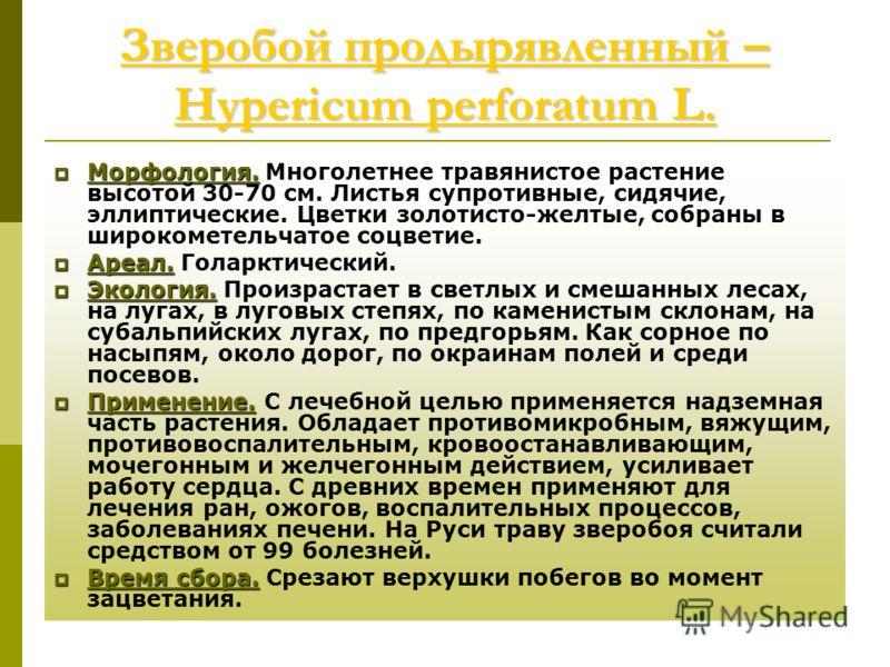 Зверобой продырявленный – Hypericum perforatum L. Зверобой продырявленный – Hypericum perforatum L. Морфология. Морфология. Многолетнее травянистое растение высотой 30-70 см. Листья супротивные, сидячие, эллиптические. Цветки золотисто-желтые, собран
