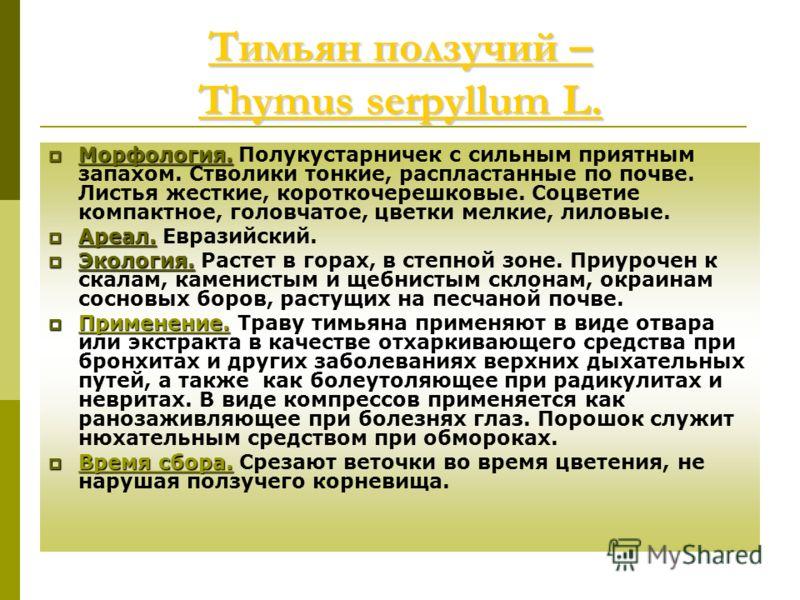 Тимьян ползучий – Thymus serpyllum L. Тимьян ползучий – Thymus serpyllum L. Морфология. Морфология. Полукустарничек с сильным приятным запахом. Стволики тонкие, распластанные по почве. Листья жесткие, короткочерешковые. Соцветие компактное, головчато